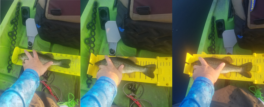 Yak Gear Fish Stik Small Fish Test