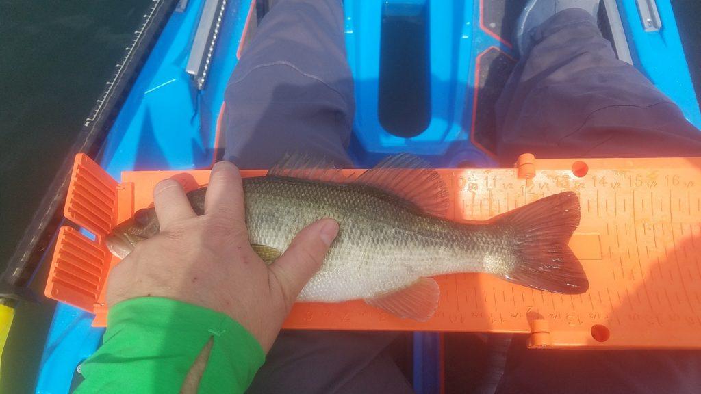 kayak measuring board comparisons ketch yak gear fishing online hawg trough payne outdoors